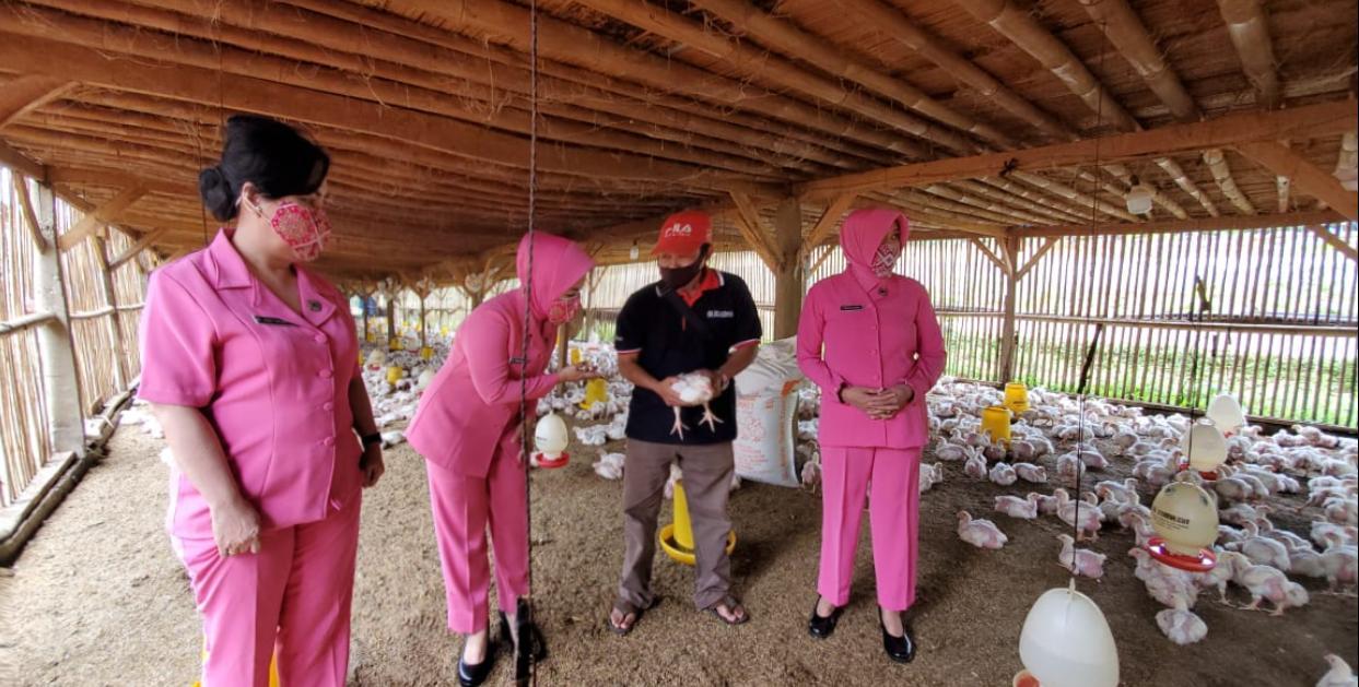Mendukung Progam Ketahanan Pangan Pemerintah , Bhayangkari Setukpa Lemdiklat Polri Panen Unggas Ayam