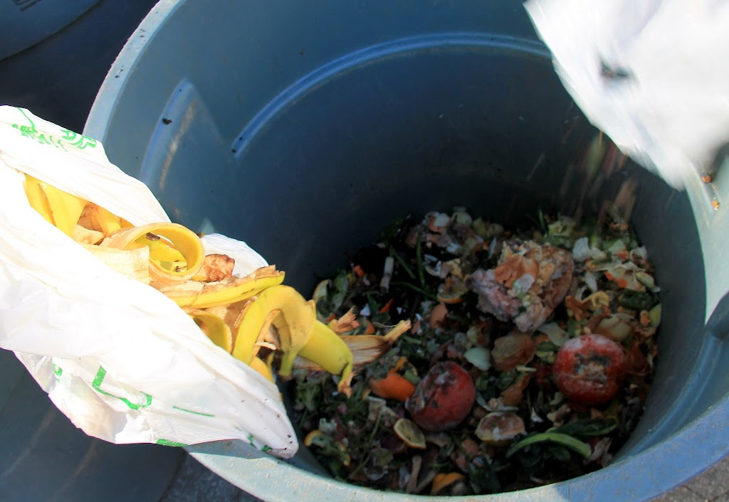 Cappy searches far and wide for a composting site