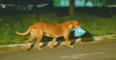 A Razão Por Que A Cadela Lilica Percorre 2 Quilómetros Diariamente Vai Deixar-te Emocionado...