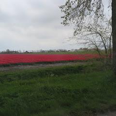 Weekend Noord Holland 2016 - IMG_6331_800x534.JPG
