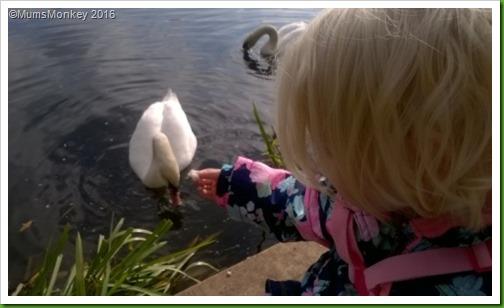 iris feeds the swans