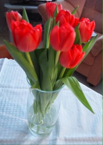 tulips, red, punainen, tulppaanit, kukat, kevät, spring, vase, maljakko,