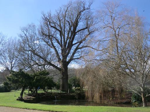 CIMG5620 Garden at Crippenden Manor