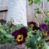 Gardening 2011 - 100_6628.JPG