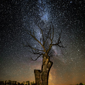 Dead wood by Jocke Mårtensson - Landscapes Starscapes ( milkyway, night photography, tree, stars, nightscapes )