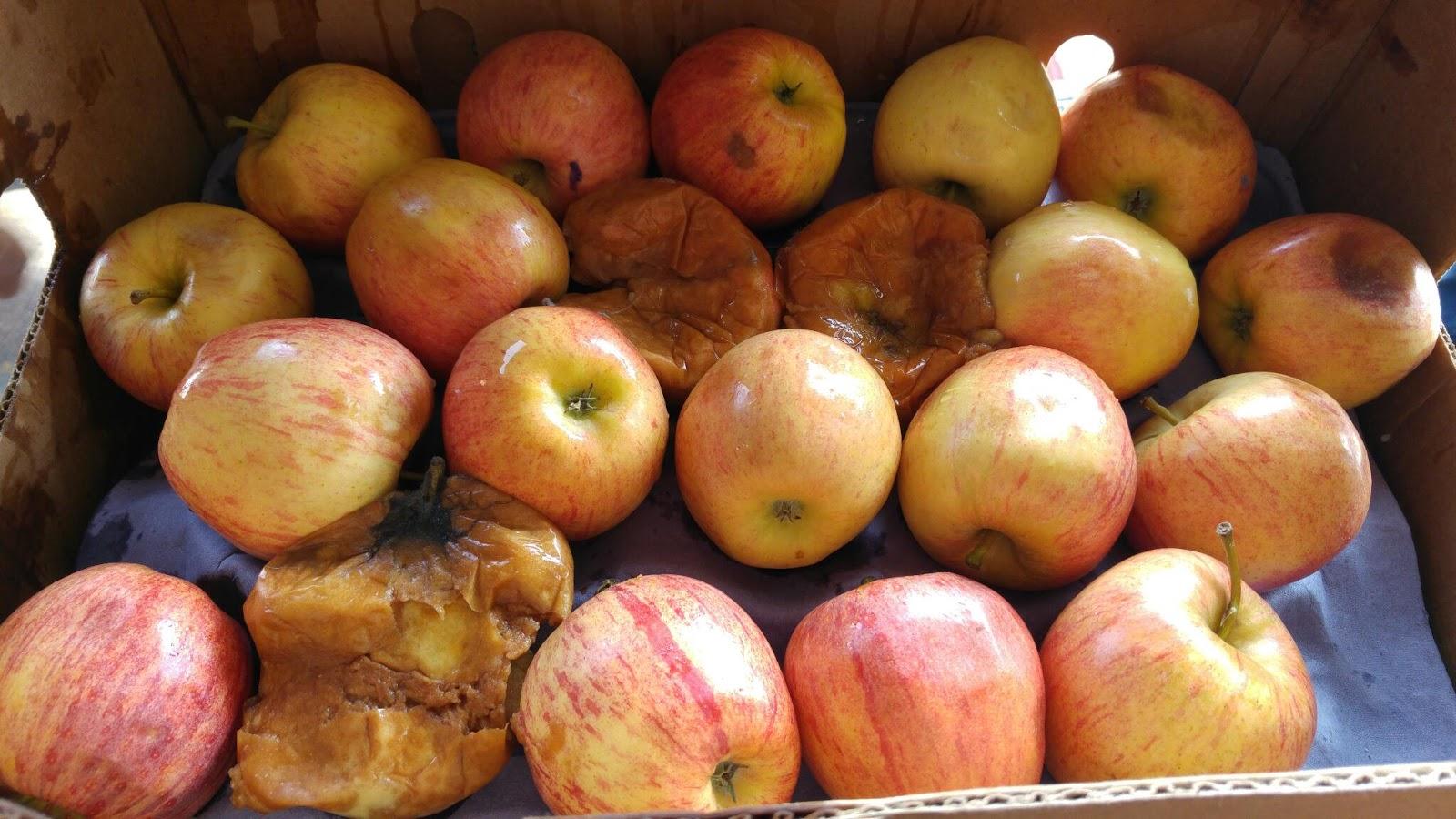 Manzanas del frutero filósofo