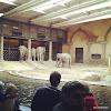 Tierpark Hagenbeck - Elefantenhaus