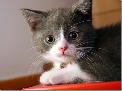 fotos de gatos (13)