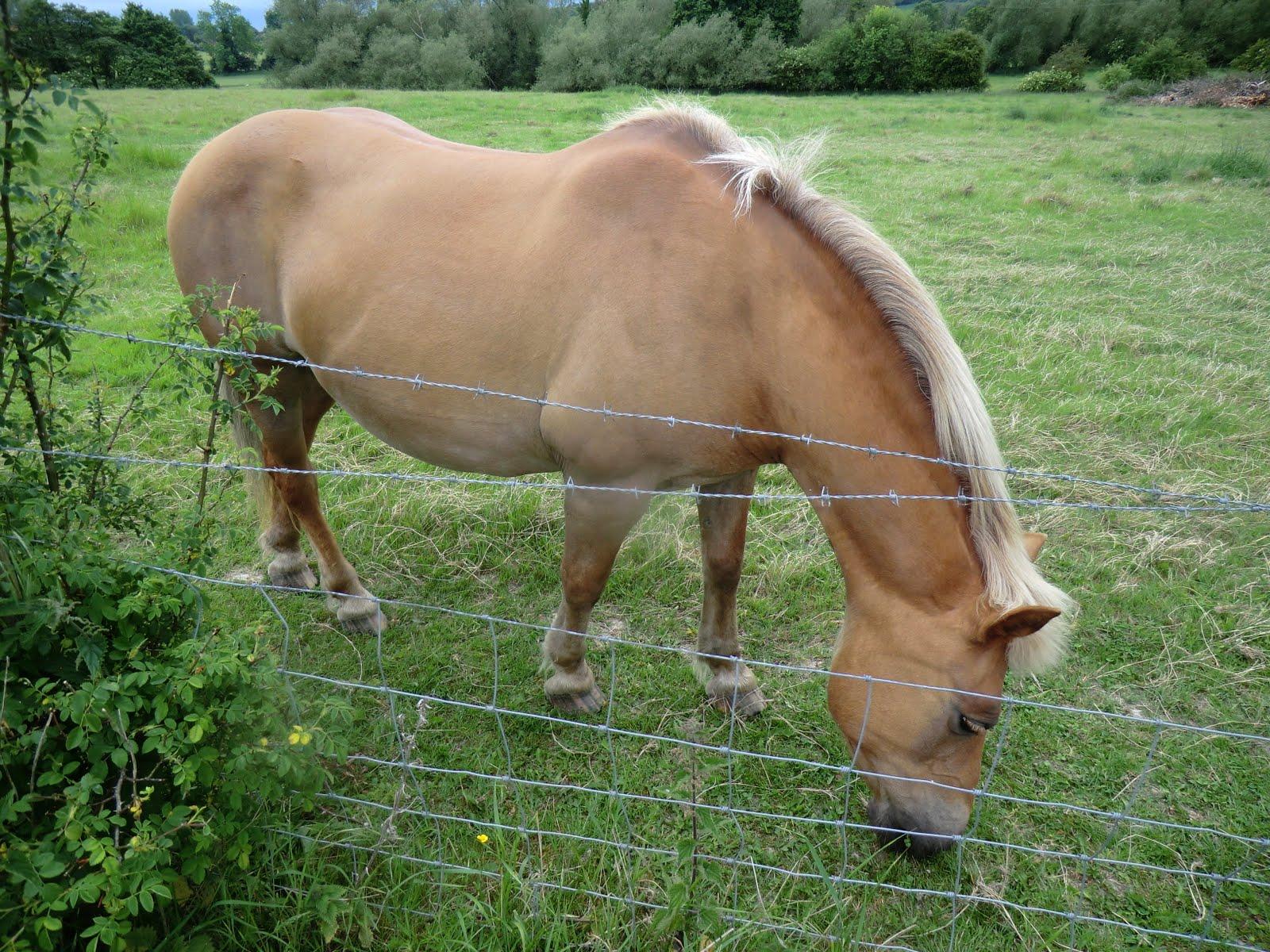 CIMG0626 Horse, Filston