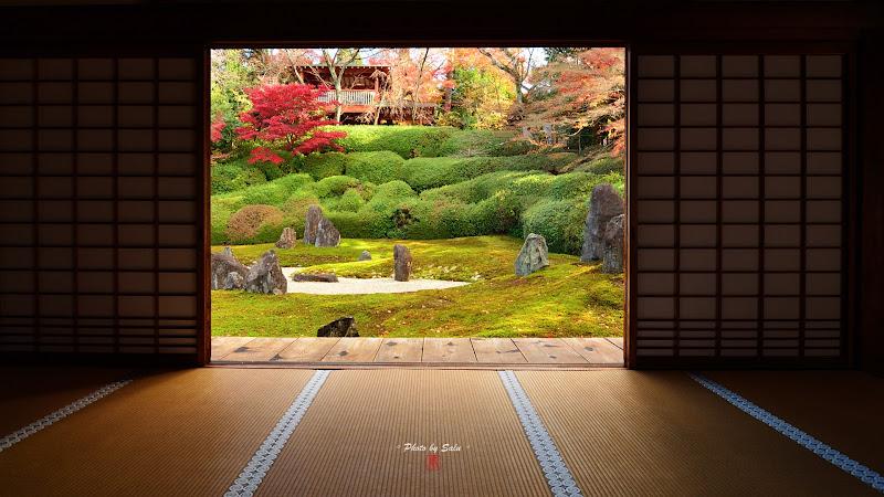 京都光明院楓葉