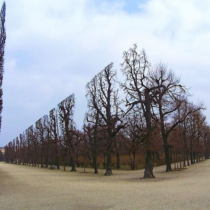 The Sculpted Hedges of Schönbrunn Palace