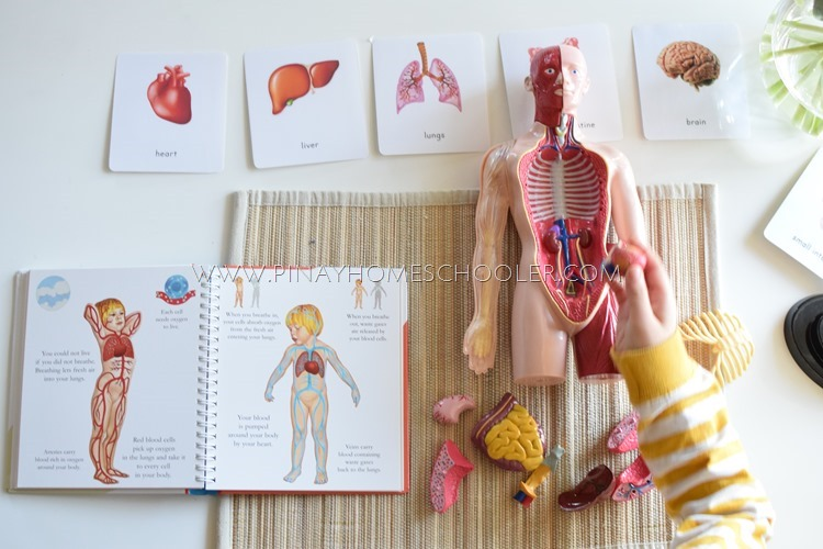 Hands On Learning On The Human Body For Preschoolers The Pinay