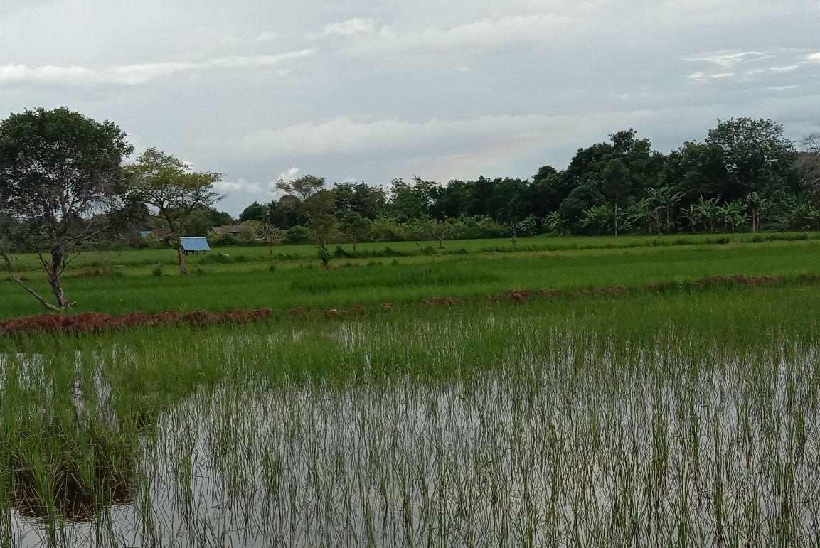 Kementan Minta Petani Indramayu Manfaatkan AUTP untuk Antisipasi Gagal Panen