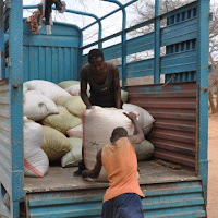 Unloading the first 50 gunny sacks of maize.