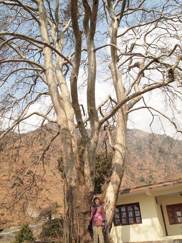 trek-shamantree-irma1.jpg