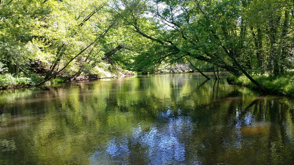 Pere Marquette River Fishing Charters