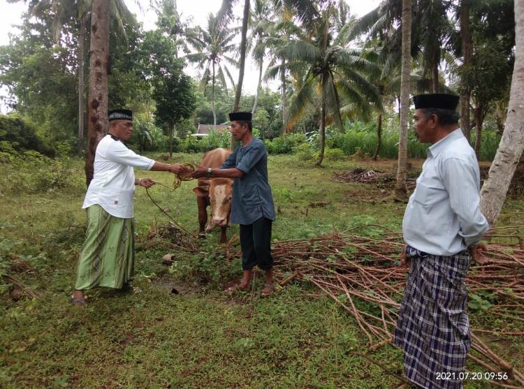 Di Hari Idul Adha 1442 H, Komunitas 99 Indonesia Potong Sembilan Sapi Kurban Untuk Dibagikan