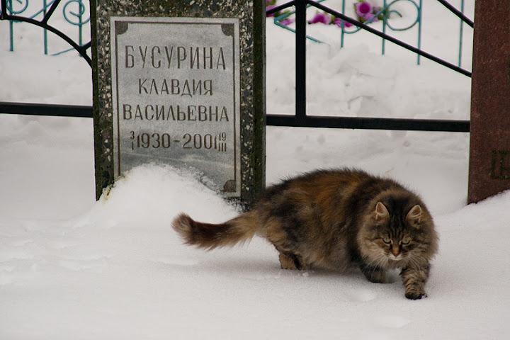 Завидово, кладбище, кошка - фото Хэла