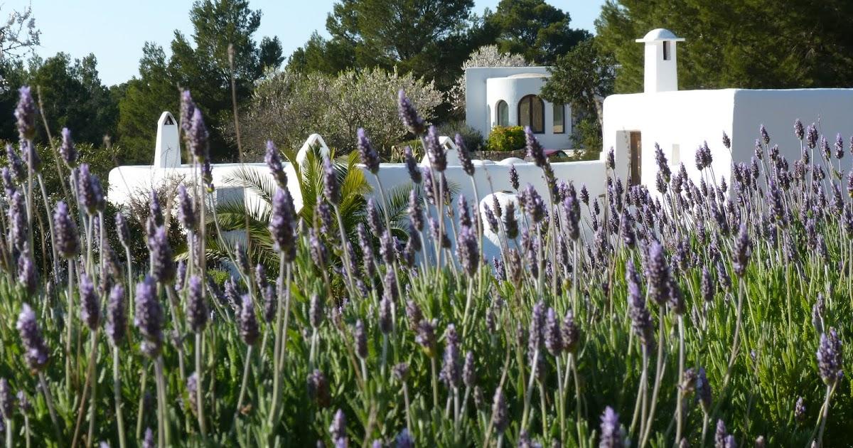 EIVISSA - IBIZA: THE HOUSE OF LAVENDER PLANTS