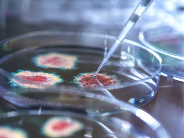تونس تسجل إصابتين بالسلالة الجديدة من فيروس كورونا