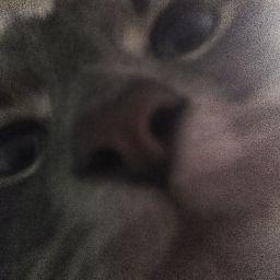 user Daisy Dog apkdeer profile image