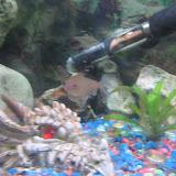 Fish - IMG_0074.JPG