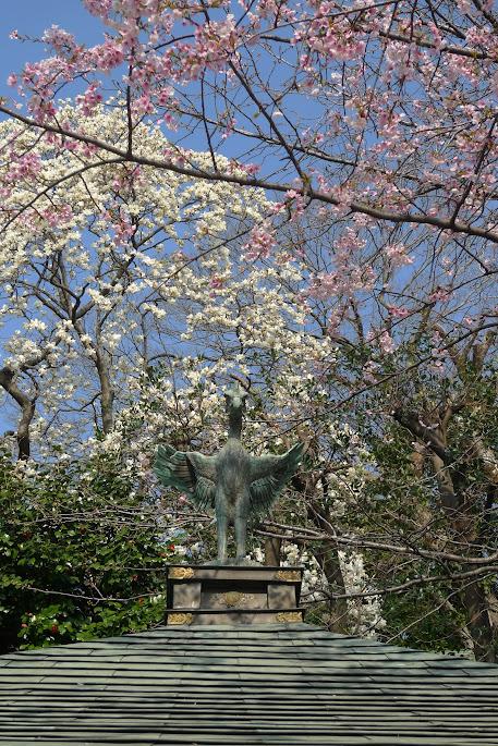 tokyo ueno sakura