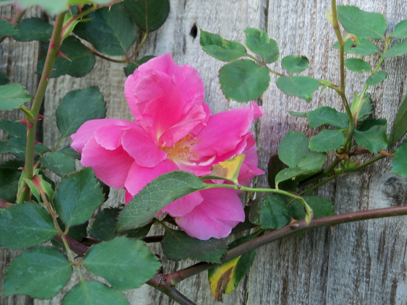 Gardening 2011 - 100_6836.JPG