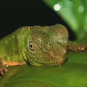 by Deny Afrian Wahyudi - Animals Reptiles (  )