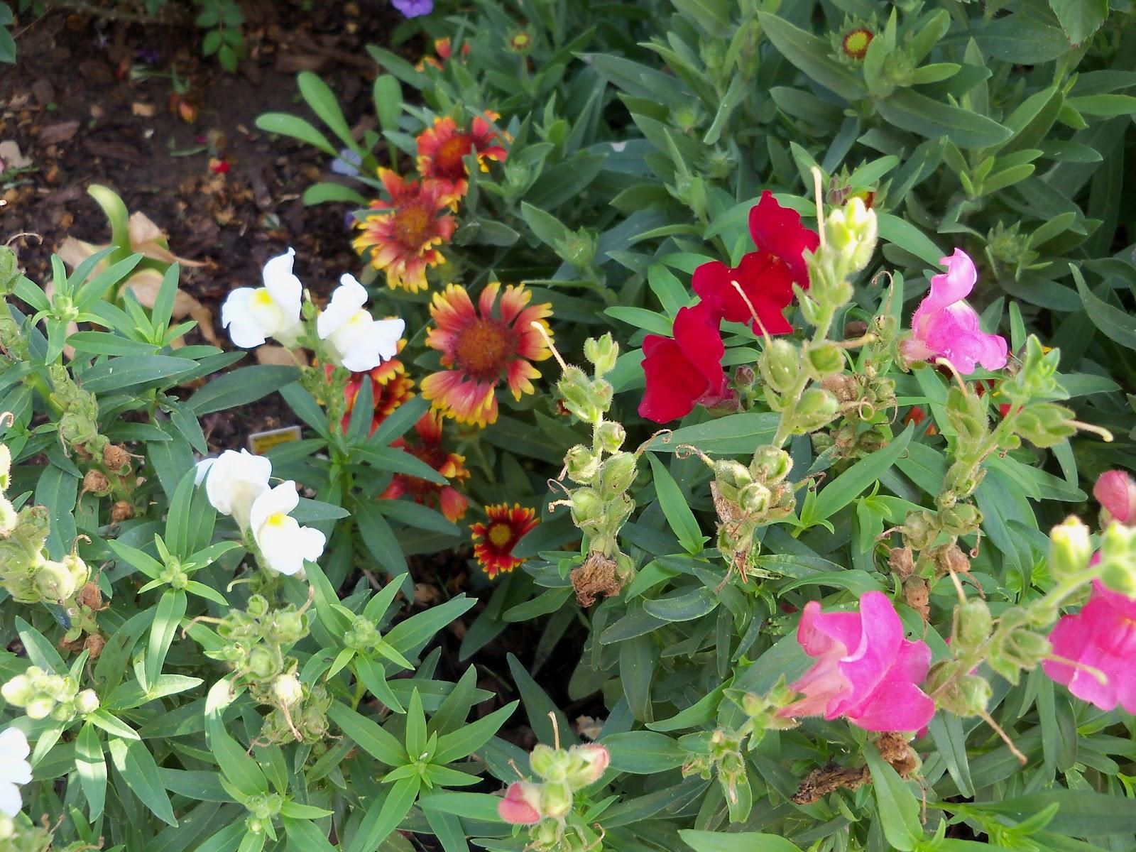 Gardening 2011 - 100_8157.JPG