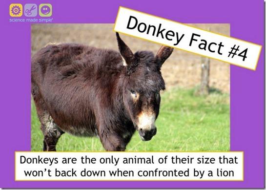 donkey fact 4