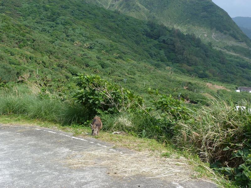 TAIWAN Ile de Lanyu - P1010484.JPG