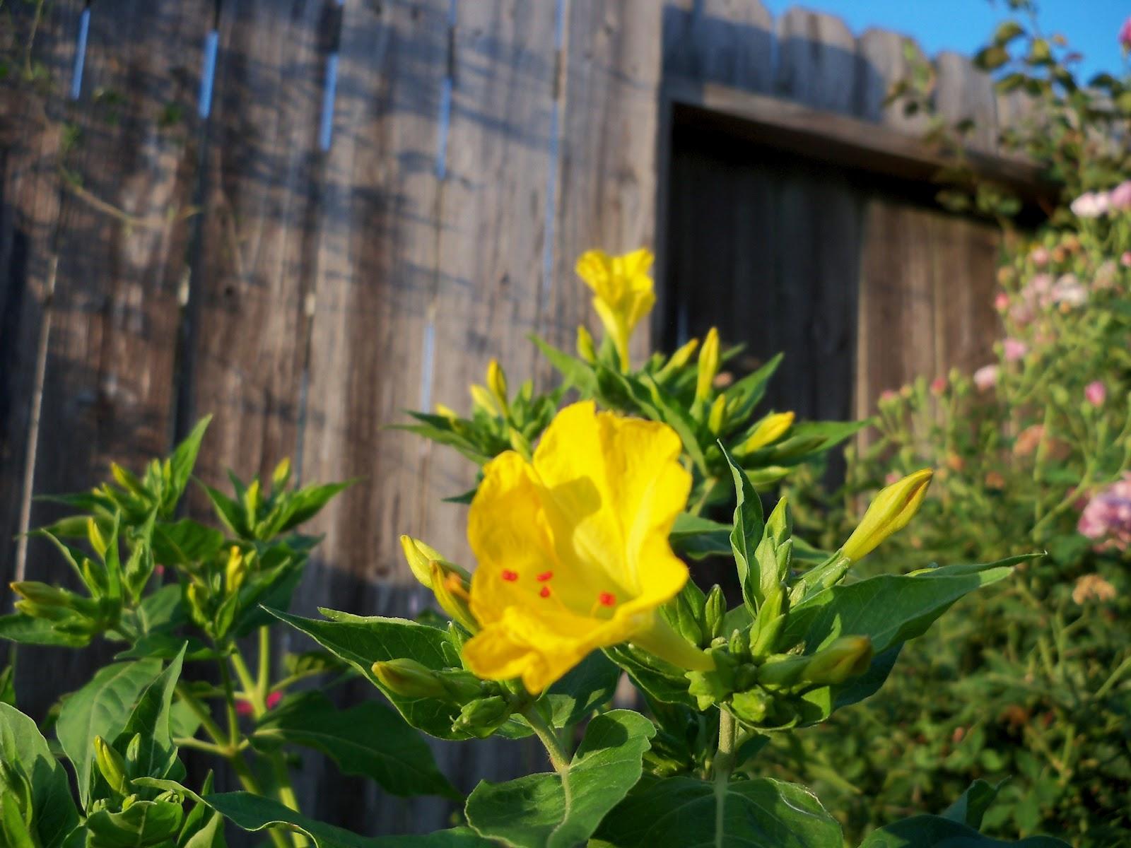 Gardening 2012 - 115_2424.JPG