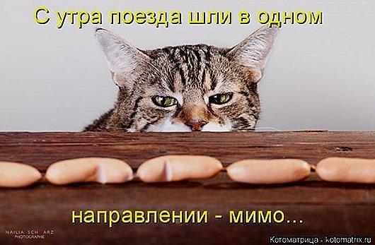 1419612317_kotomatricy