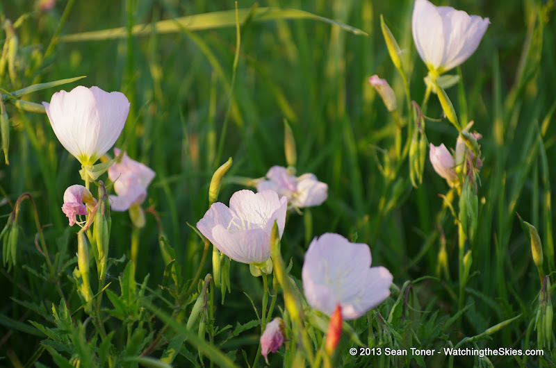 2013 Spring Flora & Fauna - IMGP6339.JPG