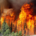 Penyebab terjadinya kebakaran hutan dan dampak yang ditimbulkan