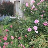 Gardening 2012 - IMG_2743.JPG