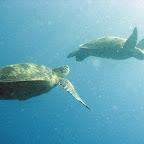Lots of turtles at Sipadan