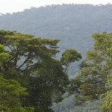 Piste de Coralie (Guyane), au-dessus de l'ancien site d'orpaillage. 26 novembre 2011. Photo : J.-M. Gayman