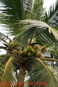 cocotiers .jpg