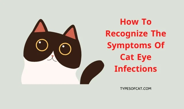 How To Recognize The Symptoms Of Cat Eye Infections