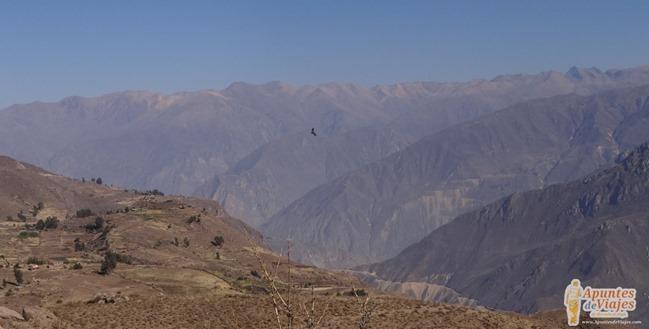 Visitar Cañón del Colca Peru 26