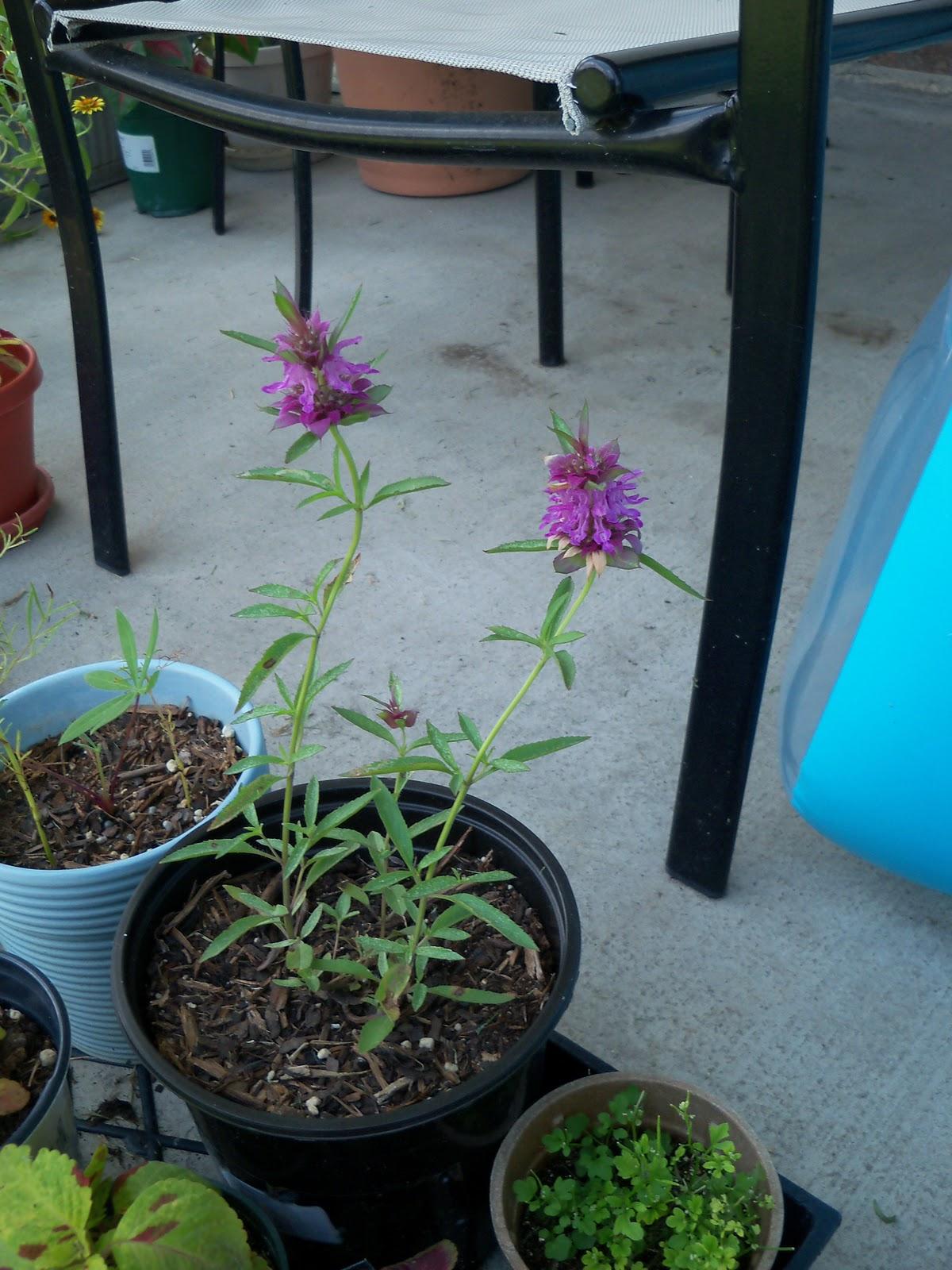 Gardening 2010, Part Three - 101_4896.JPG