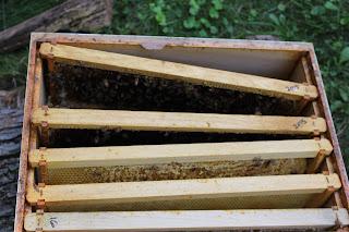 PLC Honey Fiesta 7/10/16 - IMG_3656.JPG