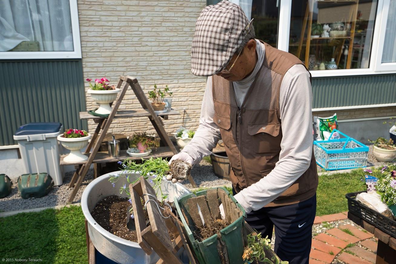 5.花の苗は、ビニールポットから取り外し、余分な土を除いて柔らかくほぐしておく