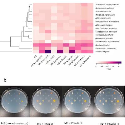 Генетический анализ для выявления различных видов бактерий, в жевательной резинки на тротуарах разных стран