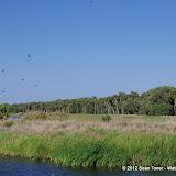 04-06-12 Myaka River State Park - IMGP9901.JPG