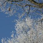 Zeisterbos December 2007 005.jpg