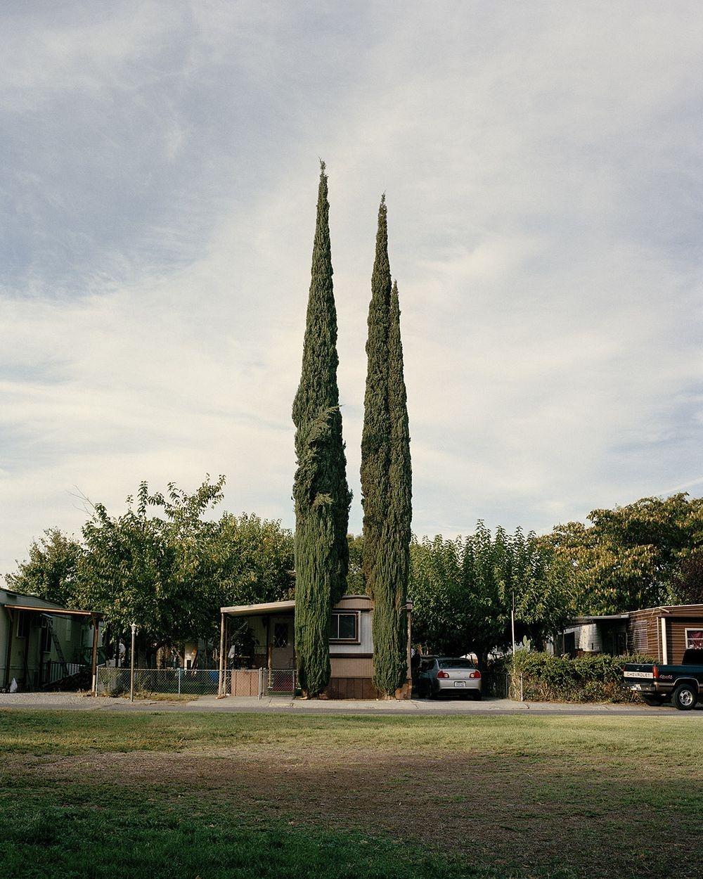 marc-alcock-topiary-4