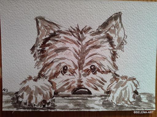 Cairn terrier3.jpg